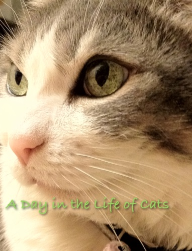 A Day In the Life of Cats - Stephanie Hart - Stephanie Hart