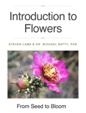 Introduction To Flowers