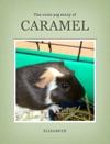 Caramel The Guinea Pig