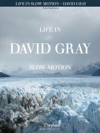 David Gray - Life In Slow Motion Songbook