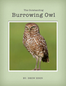 The Amazing Burrowing Owl