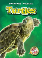 Emily Green - Turtles artwork