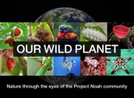 Our Wild Planet