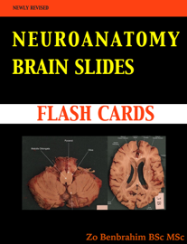 Neuroanatomy BRAIN SLIDES