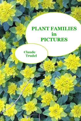 Plant Families in Pictures image