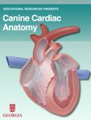 Canine Cardiac Anatomy