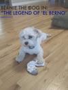Bernie The Dog