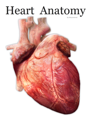 Heart Anatomy - Mauricio Barrientos book