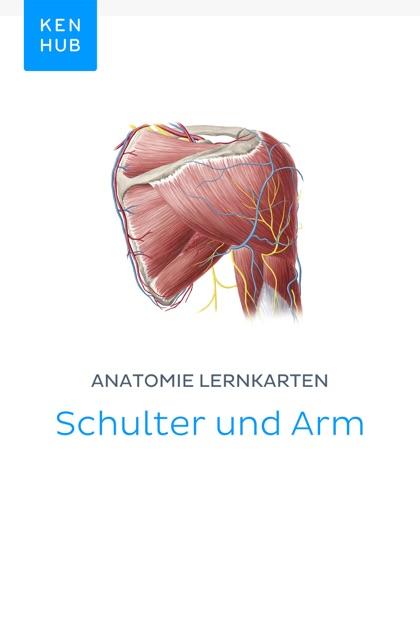 Beste Arm Anatomie Galerie - Anatomie Von Menschlichen Körperbildern ...