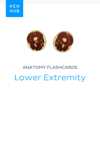 Anatomy flashcards: Lower Extremity