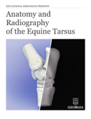 Anatomy and Radiography of the Equine Tarsus