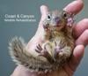 Coast  Canyon Wildlife Rehabilitation