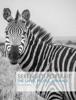 Serengeti Portrait