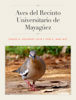 Carlos A. Delannoy JuliГЎ & JosГ© A. Mari Mut - Aves del Recinto Universitario de Mayaguez ilustraciГіn