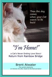 I M Home A Cat S Never Ending Love Story Cat Reincarnation Stories Animal Life After Death Pet Heaven Pet Loss Reincarnation