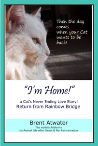 I'm Home! a Cat's Never Ending Love Story, Cat reincarnation stories- Animal Life after Death, Pet Heaven, Pet loss & Reincarnation Book Cover