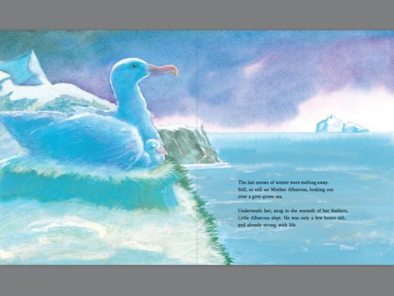 Little Albatross (Enhanced Edition) on Apple Books