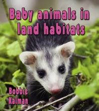Baby Animals In Land Habitats