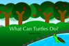 What Can Turtles Do