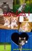 Love Cats 1