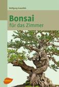 Bonsai für das Zimmer