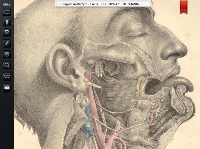 Surgical Anatomy - Student Edition on the App Store