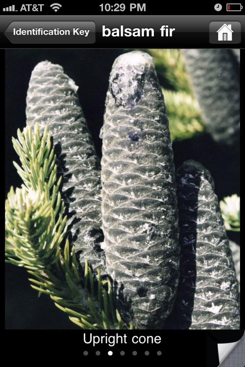 Key to Woody Plants of Wisconsin Forests
