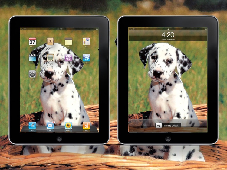 Cool Dog Wallpapers HD Lite