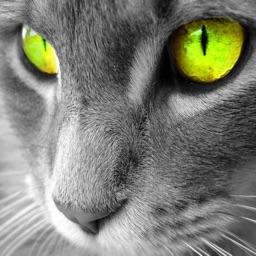 Cat Breeds Wallpapers HD+