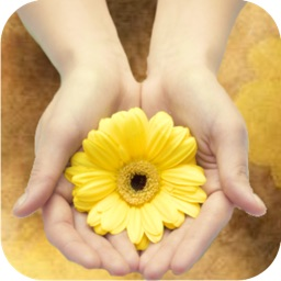 Dr. Bach Flower Remedies