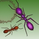 Ant Squish