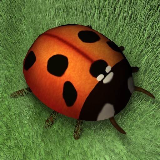 Ladybug Dreams Review