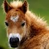A Talking Pony Friend Reviews