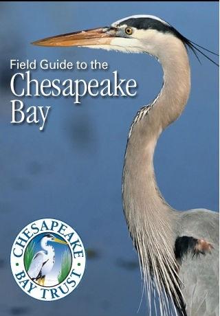 Chesapeake Bay Field Guide