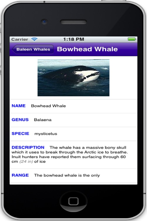 Cetaceans screenshot-2