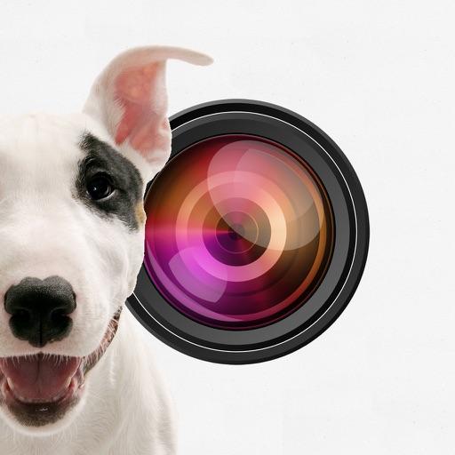 Doggie Camera