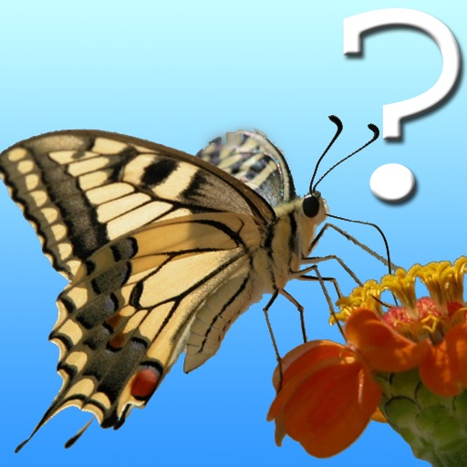 Butterfly Quiz