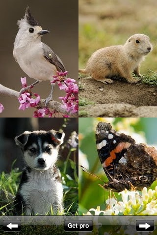Animal Wallpapers & Images