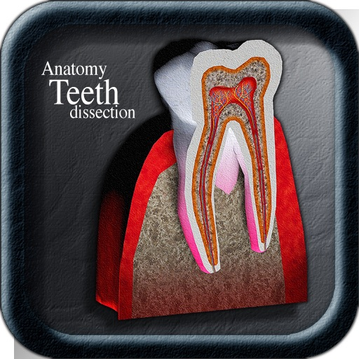 Anatomy Teeth Dissection icon