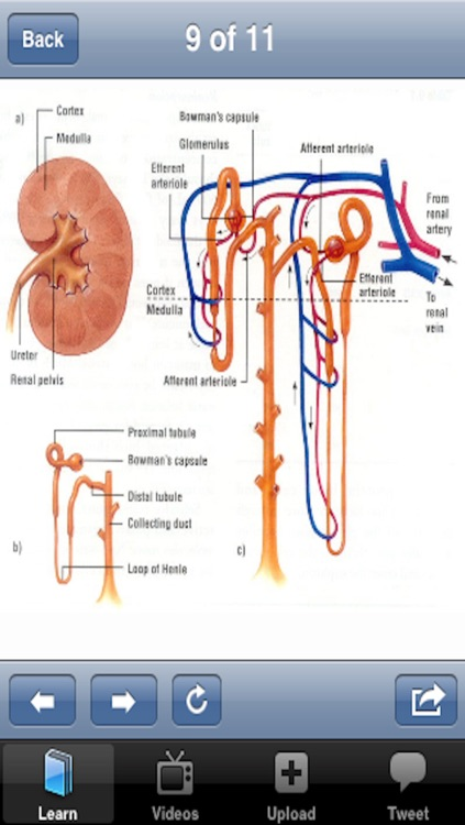 The Urinary System screenshot-3