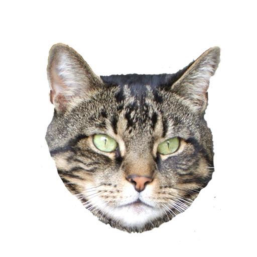 Cat Run (Space Kitty) PAID