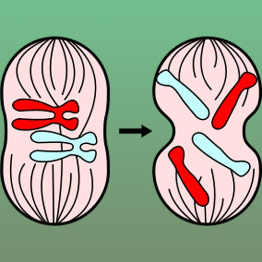 Biology: Reproduction