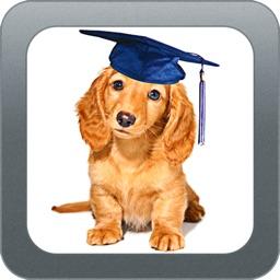 Dog Training Videos