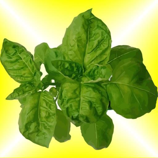 Grow Herbs