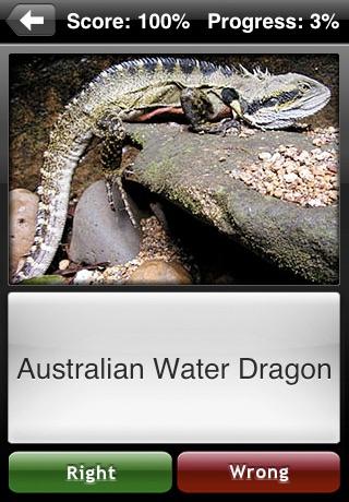 Lizard Flip: Flashcards of Dragons & Lizards