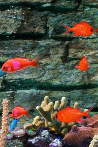 MyReef 3D Aquarium Screenshot 4