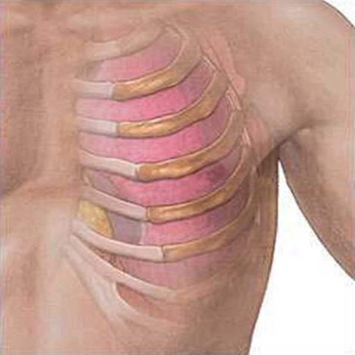 Thoracic Wall Anatomy
