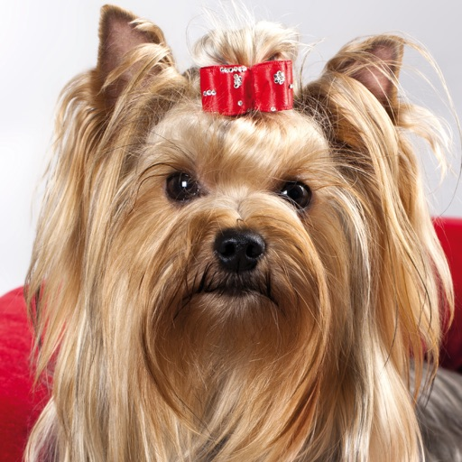 Pets Music Radio icon