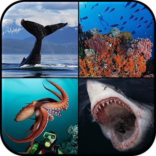 Ocean Encounters:  A Photographic Exploration of Marine Wildlife by Brandon Cole icon