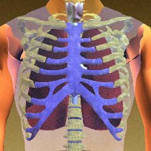 Anatomy of the Thorax icon